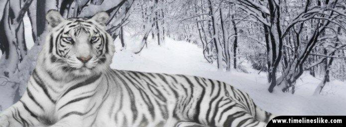 Leopard na snijegu