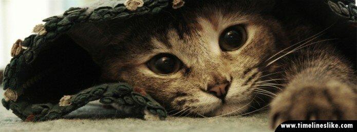 Mačka u dekici