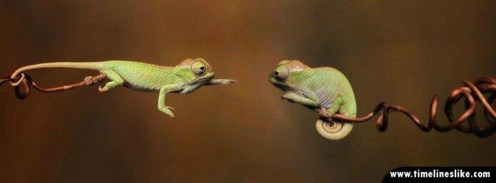 Dva kameleona