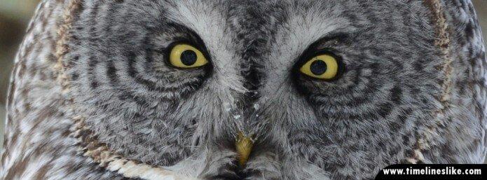 Sovine oči