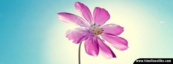Prekrasni cvijet